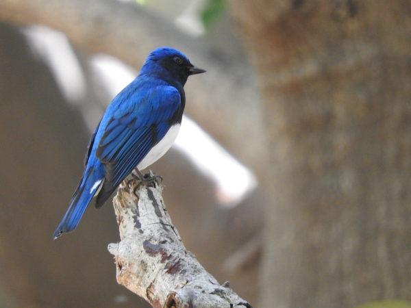 サンプル写真鳥